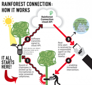 Skema kerja Rainforest Connection